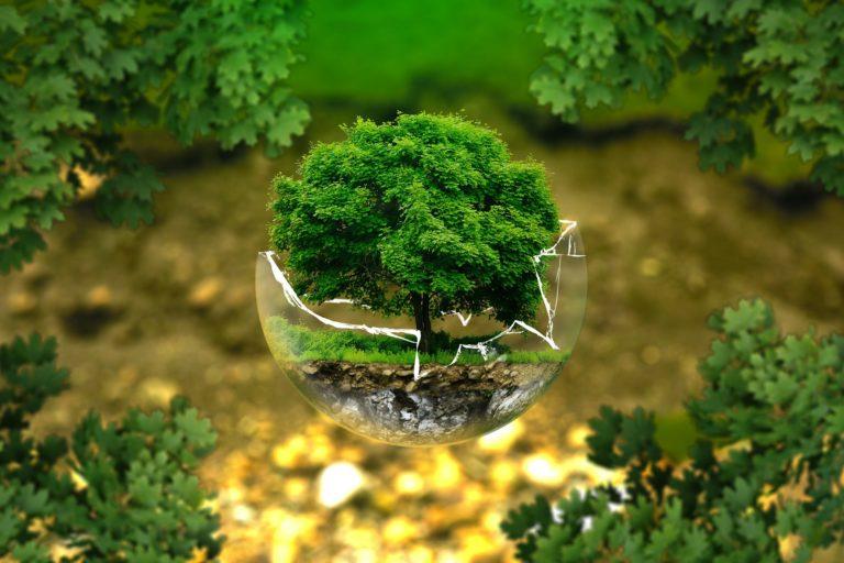 Kako misliti zeleno u vlastitom domu?