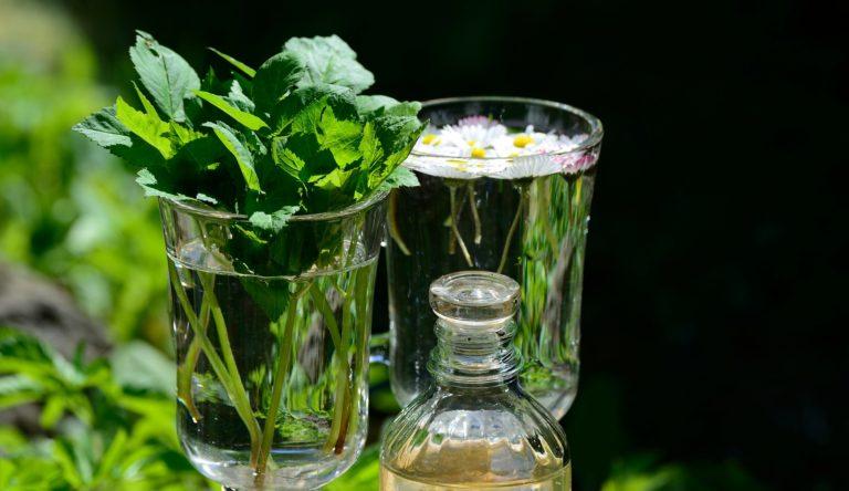 Ljekovito bilje i njegova korist za zdravlje
