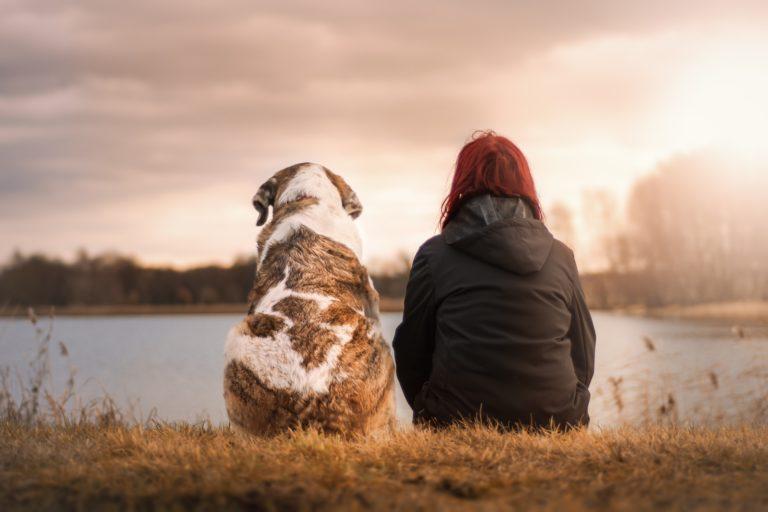 Najodaniji psi na svijetu – najbolji prijatelji svake obitelji